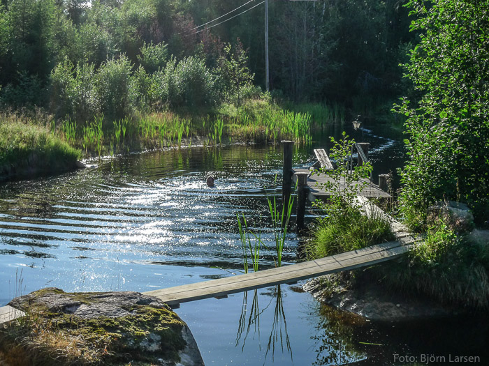 Att simma runt ön i dammen