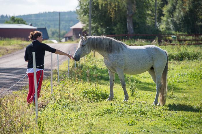 Jenny och dalahästen